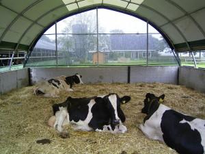 E-serie.koeien1